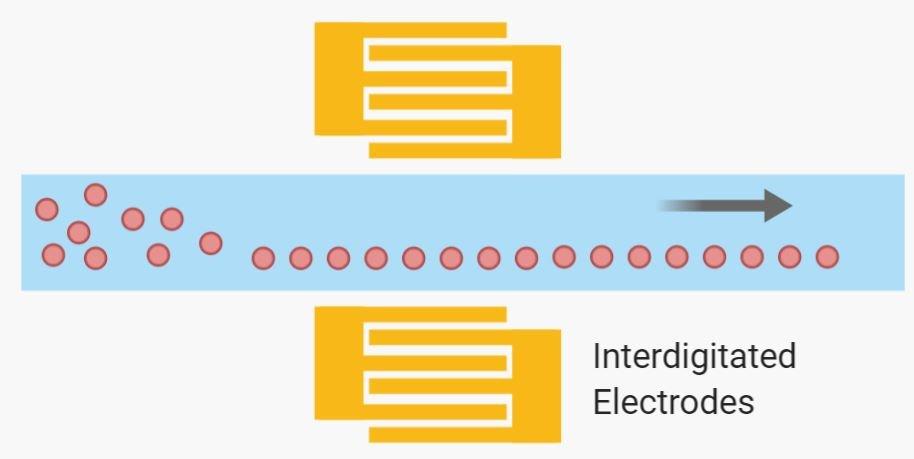 Microfluidic acoustophoretic cell separation