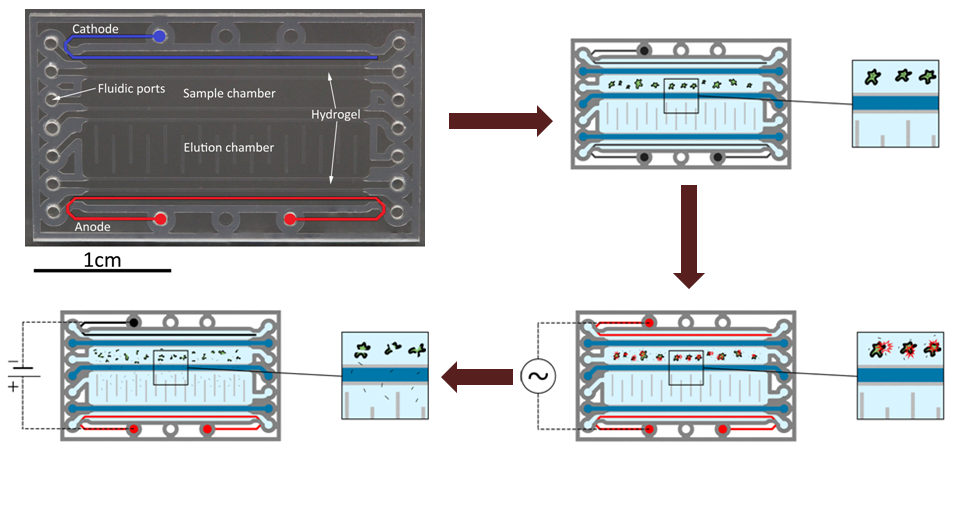 miRNA extraction microchip