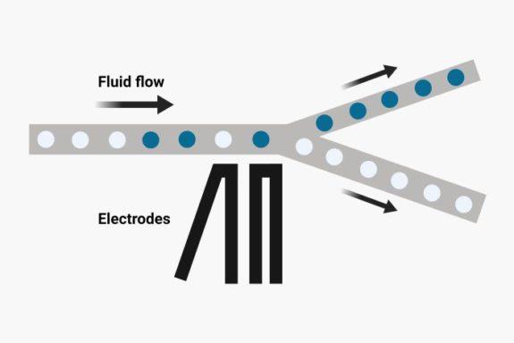 Droplet microfluidic chip schematic