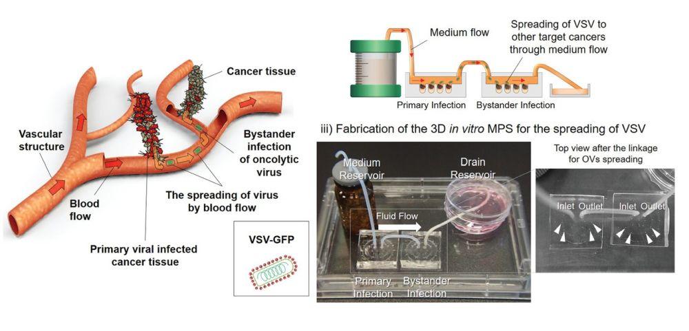 Oncolytic virus mirofluidic chip