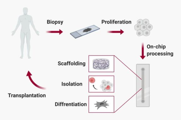 Microfluidics for regenerative medicine