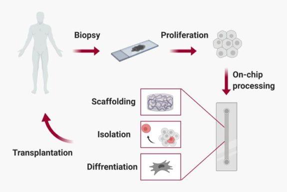 Microfluidics for regenerative medicine