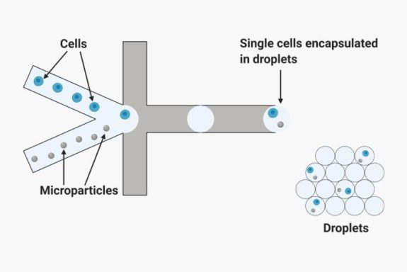 Single cell analysis using droplet microfluidic