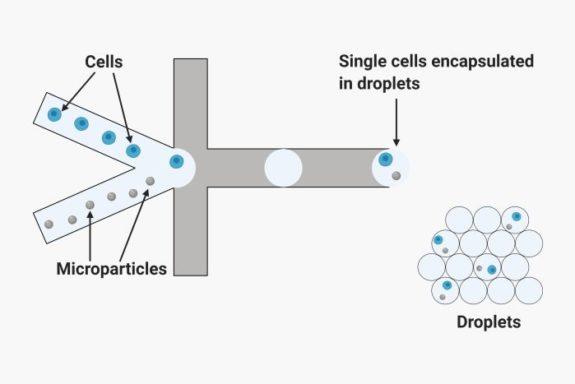 Single cell analysis using droplet microfluidic