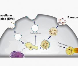 Exosome schematic