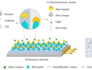 Biosensor schematic
