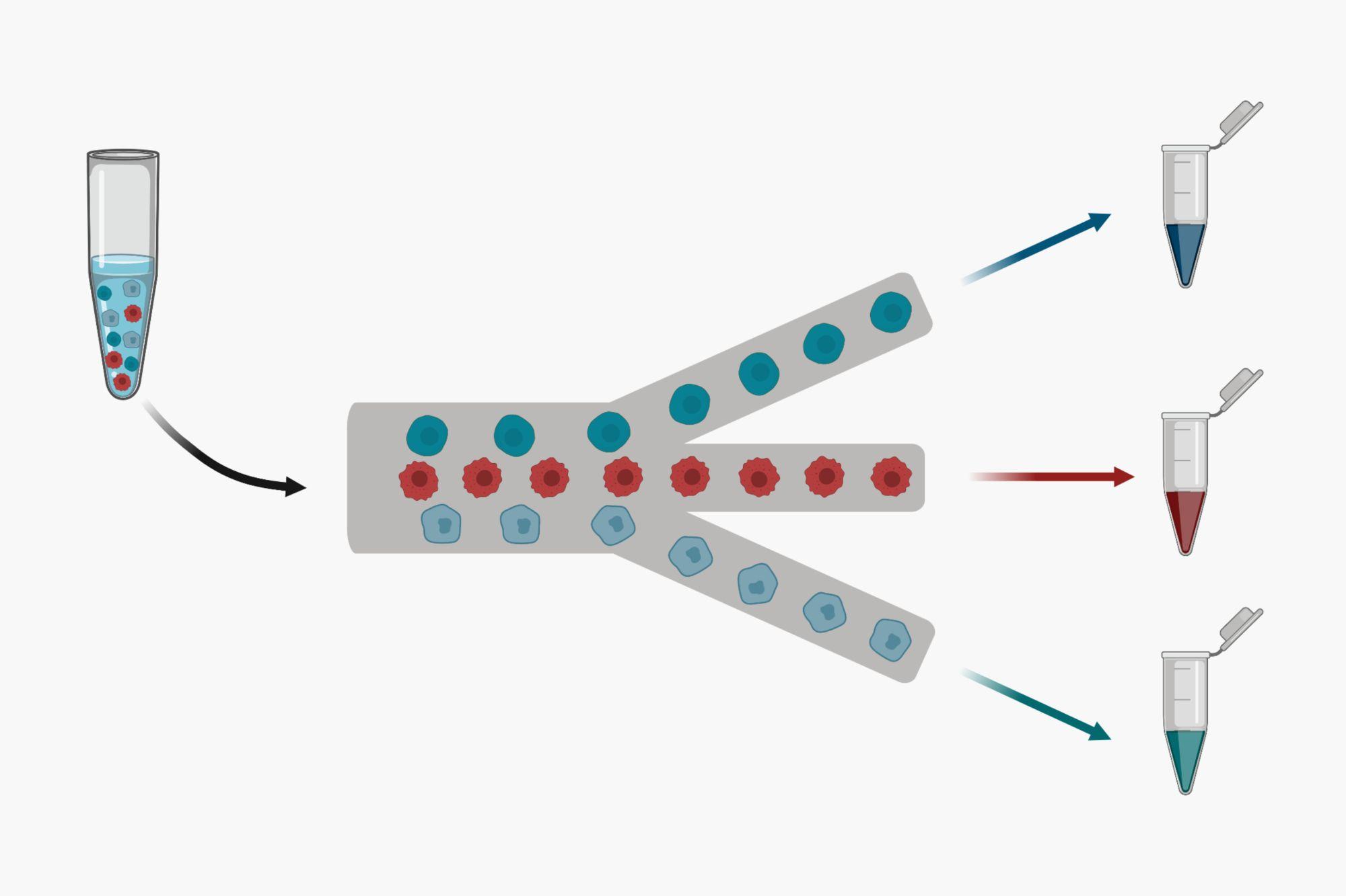 Microfluidic cell sorting