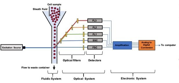 Schematic components of flow cytometers