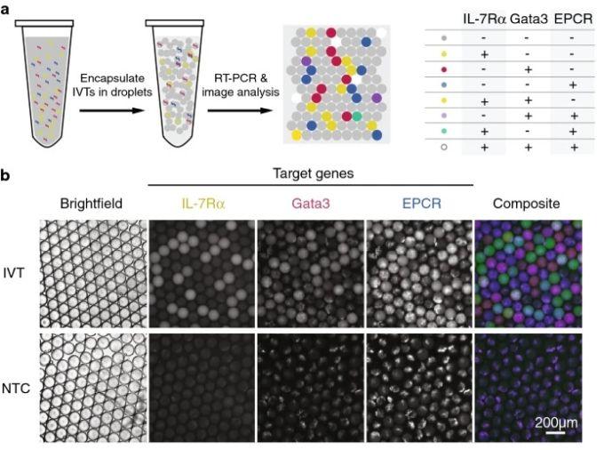 droplet microfluidic single-cell analysis