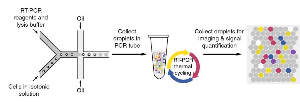 microfluidic rt-pcr chip