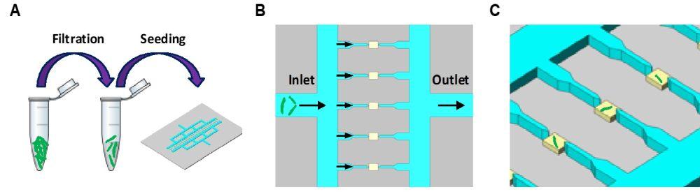 microfluidic single cell analysis