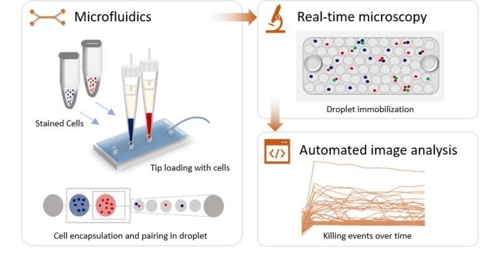 Microfluidic chip for analysis of natural killer cells in real time