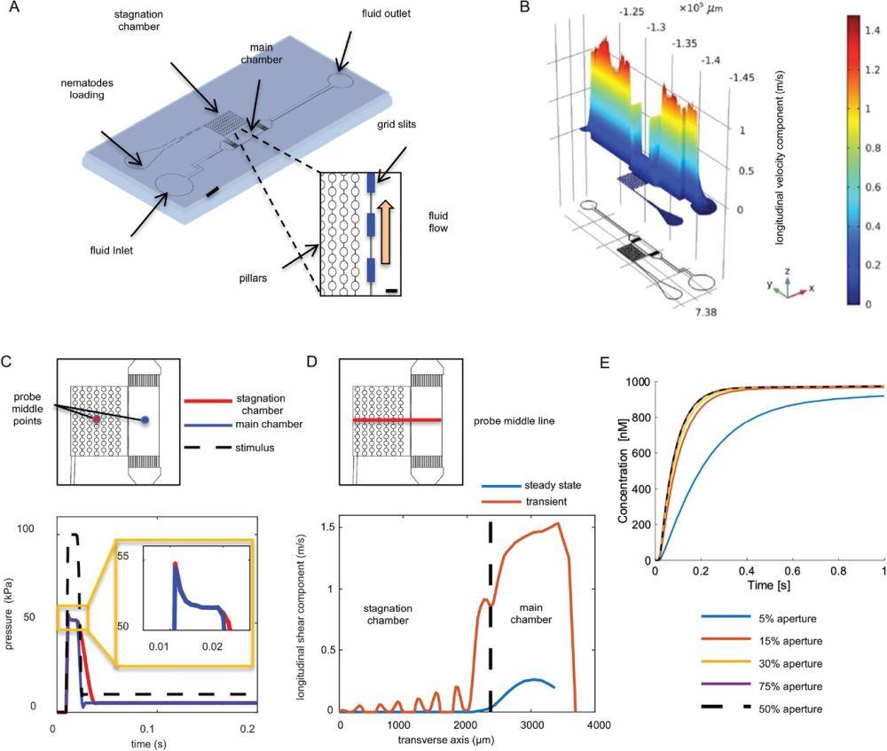 microfluidics for mechanosensitivity analysis in Caenorhabditis elegans