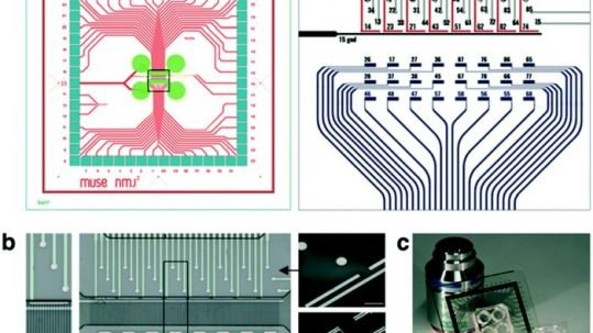 neuromuscular junction on a chip